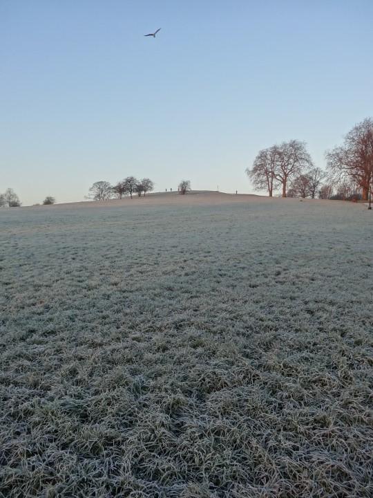Primrosehill-frozen