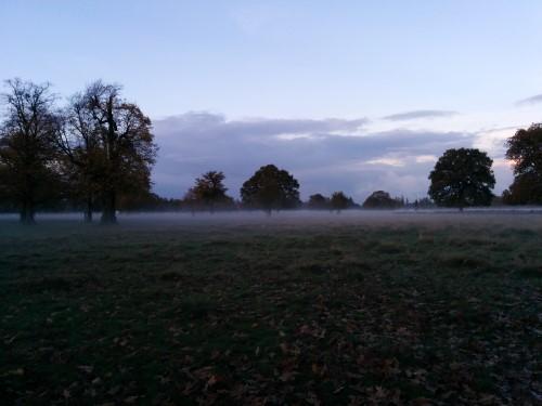 fog-Bushy-Park