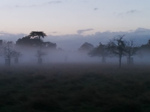 foggy-Bushy-Park-Trees