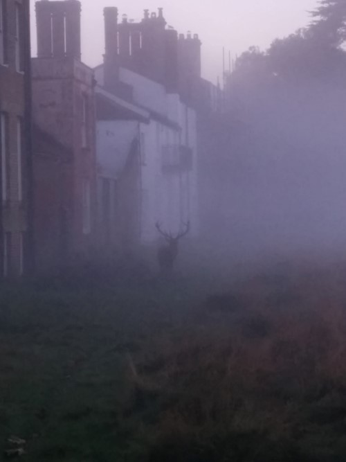 Unexpected Foggy Encounter With a Stag in Bushy Park